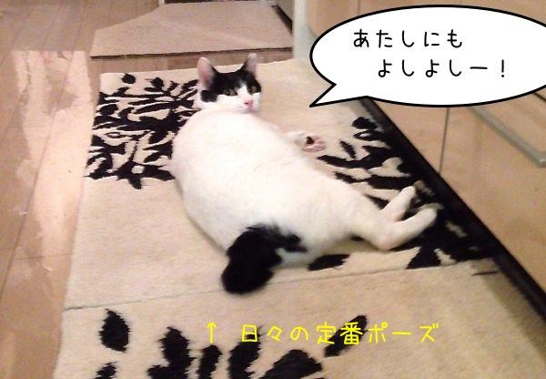 yume_girla