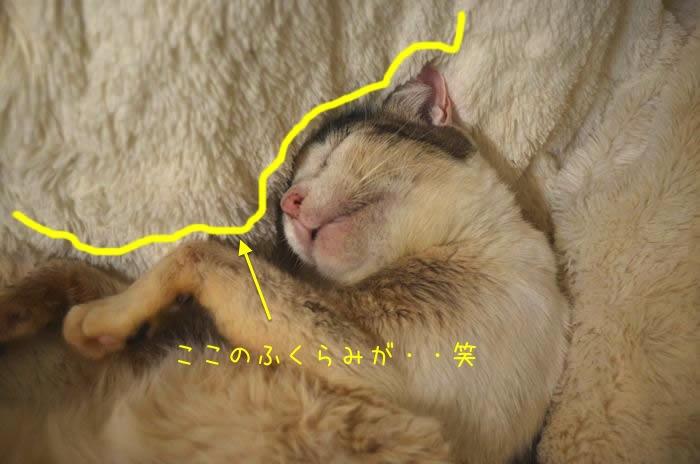 kotatsu_1a
